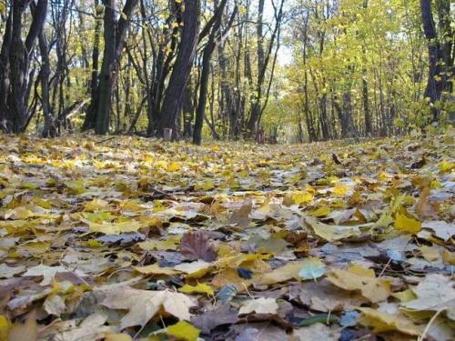 Jesienna wyprawa do lasu Bielańskiego