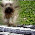 Rozmazana sylwetka psa #pies #duch #kundel #kundelek