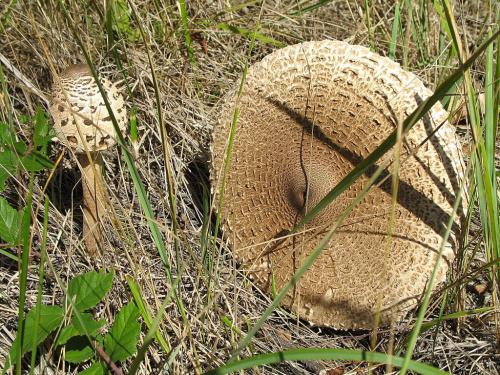 #grzyby #las #przyroda #kanie #jesień
