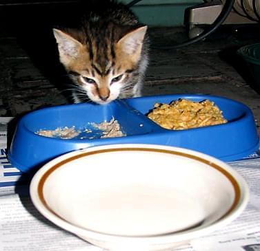 Batman, jestem taki mały muszę dużo jeść! Foto: moja córka