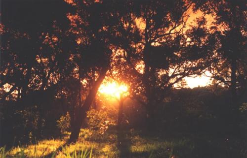 zachód w parku, Sydney