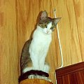 prawie jak figurka #kot #gapa #figurka #zenit