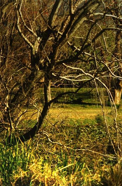 Suche drzewo, Centennial Park Sydney #SucheDrzewo #park #trawa