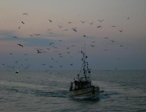 połów skończony #morze #połów #ptaki #statek