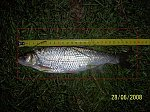 images24.fotosik.pl/238/92e16eb6b2b17f4cm.jpg