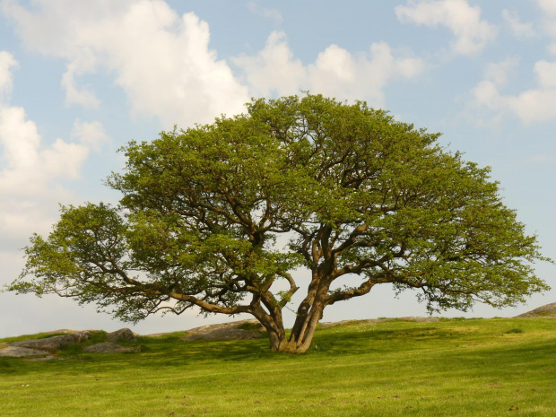 #bornholm #dania #natura #drzewo
