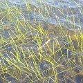 #wąż #woda #jezioro #zalew #Hiszpania
