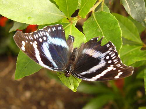 Motyli Park w Nexo #bornholm #dania #motyli #park #nexo