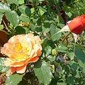 mama z dzieckiem #róze #kwiatki