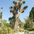 Jardin Exotique - jeden z najpiękniejszych ogrodów Europy #MonacoIMonteCarlo