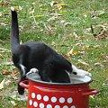 #oskar #sonia #pies #psy #koy #koty #zwierzęta #ratlerek #pinczer #kundel