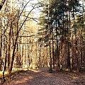 #las #ścieżka #droga #jesień #liście