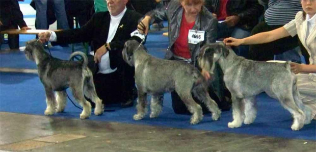 klasa championek Ave Concord Rumba, Fiona Punta Arenas, Freya Floriana
