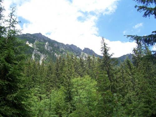 Widok ze szlaku w Dolinie Roztoki
