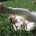 Julian #Kot #koty #zwierzęta #ciekawe #śmieszne #zabawne #fajne #humor