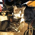 Co ich tak zaciekawiło? #Kot #koty #zwierzęta #ciekawe #śmieszne #zabawne #fajne #humor