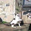 Dzieło mojego 9-letniego syna #Kot #koty #zwierzęta #ciekawe #zabawne #śmieszne #fajne #przeróbki
