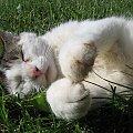 Cały on #kot #koty #zwierzęta #ciekawe #zabawne #fajne
