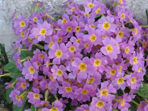 Hobby mojej żony #kwiat #kwiaty #przyroda #rośliny