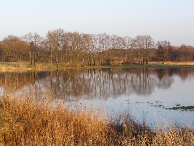 #jezioro #drzewa #łąka #łąki #rozlewisko #wiosna